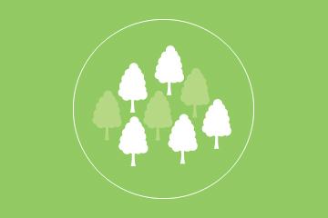 ThiningForesty_Green